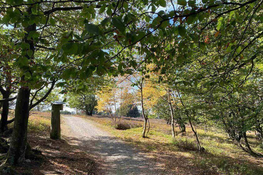 Wanderweg auf dem Kahlen Asten durch Bäume und Sträuchern mit Lichteinfall