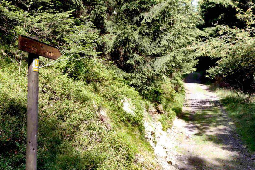 Wanderweg Richtung Aussichtsturm Heidekopf mit dem Schild zum Turm