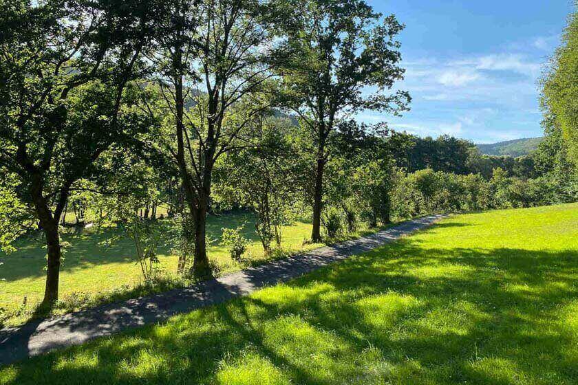 Idyllischer Weg durch grüne Wiesen mit Laubbäumen und Bachlauf
