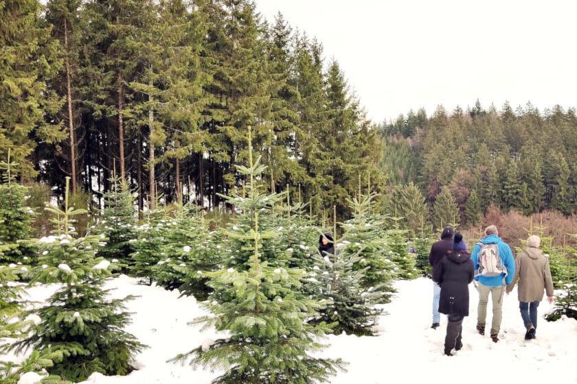 Titelbild Weihnachtsbaumschlagen
